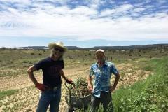 bibo-garlic-don-russel-field