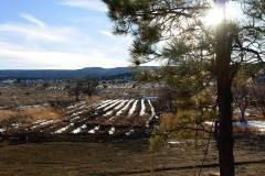 bibo-lower-field-planted-snow-rows-12-18-08